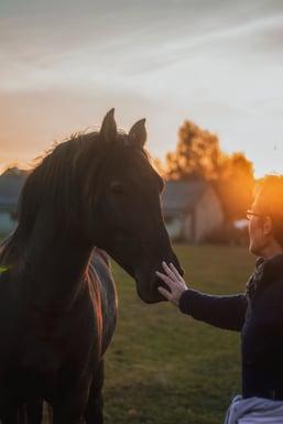 man-petting-horse